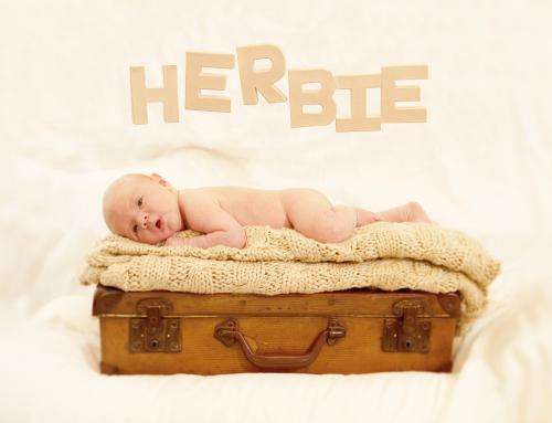 Meet Baby Herbie!